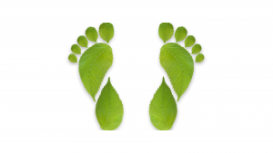 Carbon footprint green leaves